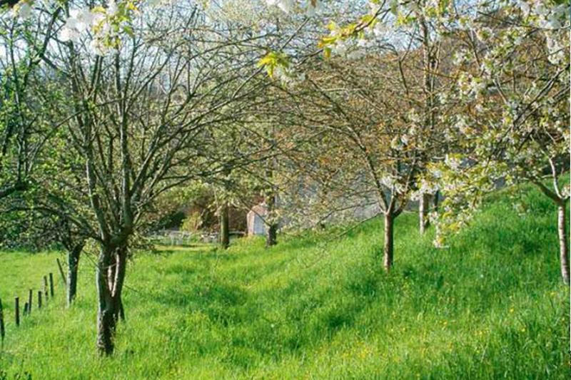 Verger Jardins de la Balbrière